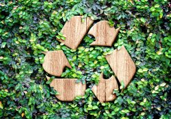 Wood texture Recycle icon on green leaves wall.
